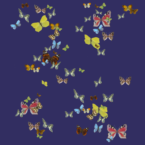 BUTTERFLY SHOWER by Shyama Ruffell