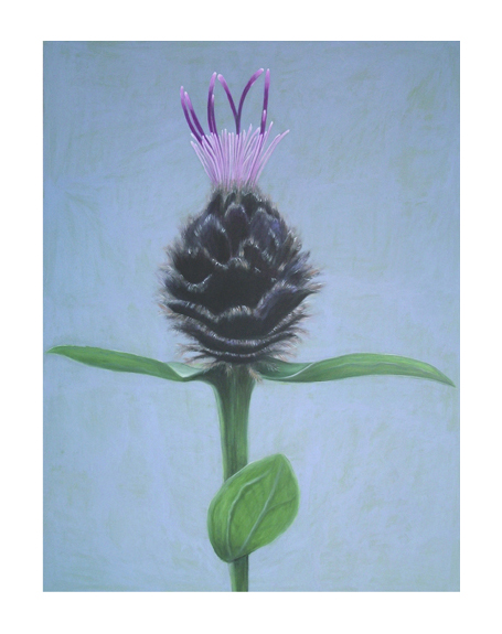 KNAPWEED by Shyama Ruffell