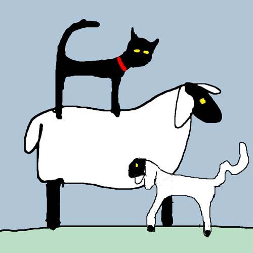 CAT SHEEP AND LAMB card